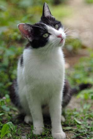 外猫・家猫_f0166234_2325827.jpg
