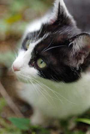 外猫・家猫_f0166234_235621.jpg
