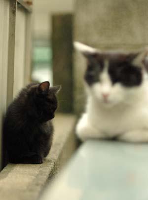 外猫・家猫_f0166234_240081.jpg
