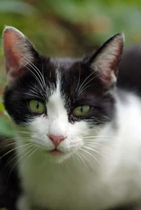外猫・家猫_f0166234_2565744.jpg