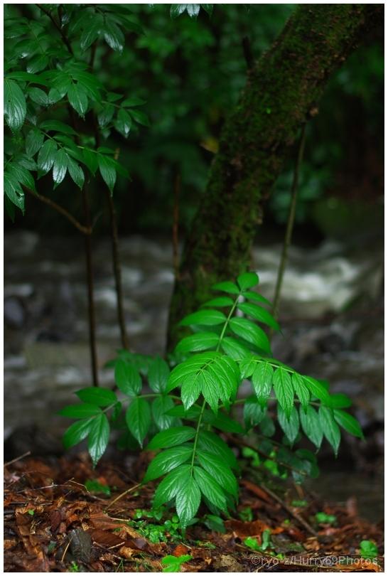 緑の季節_e0063851_18372437.jpg