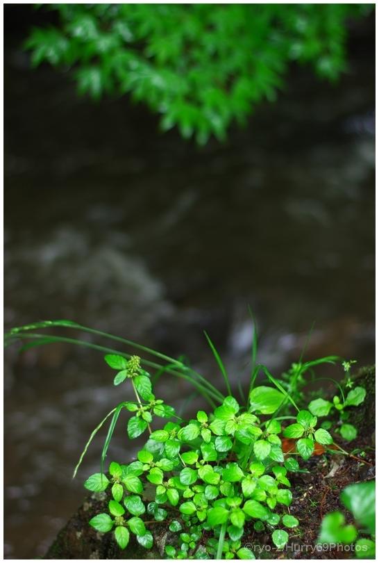 緑の季節_e0063851_18374220.jpg