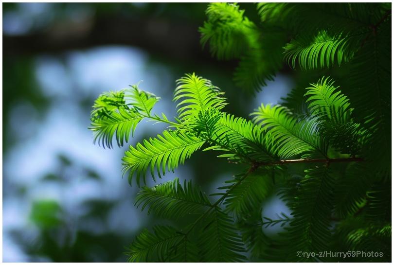 緑の季節_e0063851_18375830.jpg