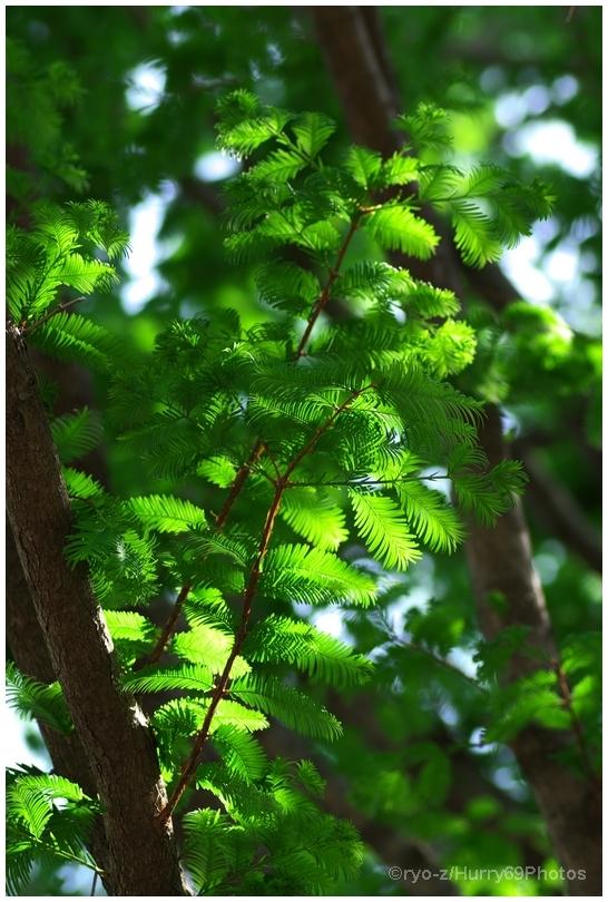 緑の季節_e0063851_18381459.jpg