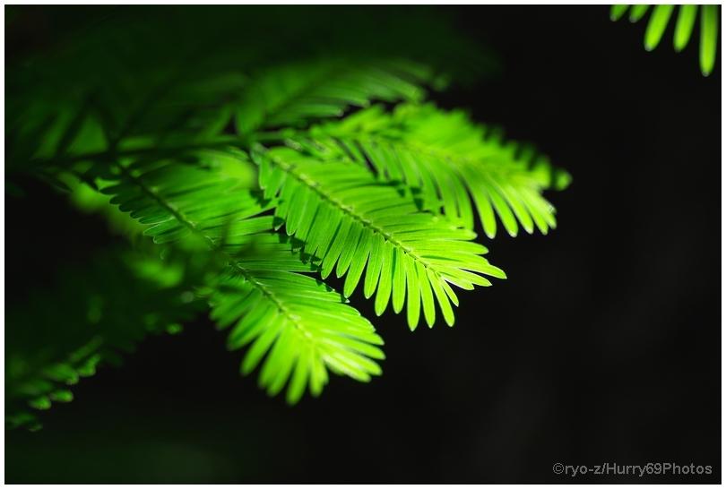 緑の季節_e0063851_18382619.jpg