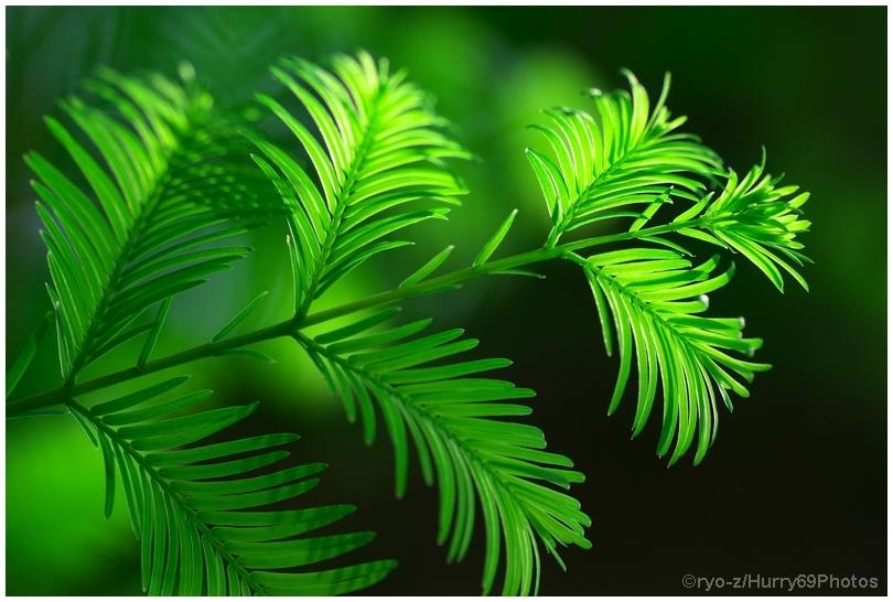 緑の季節_e0063851_18383489.jpg