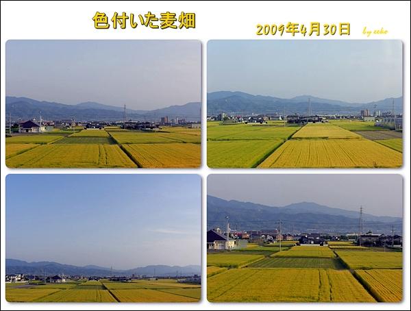 f0104569_148839.jpg