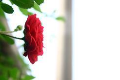 風街ろまん いい匂い57  「フライングV飛翔」  _c0121570_1592964.jpg