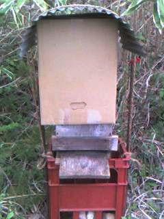 ミツバチの分蜂_e0036983_2033418.jpg