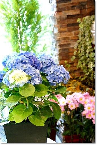 b0145398_21165643.jpg