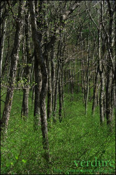 森林浴気分_f0100215_2354278.jpg
