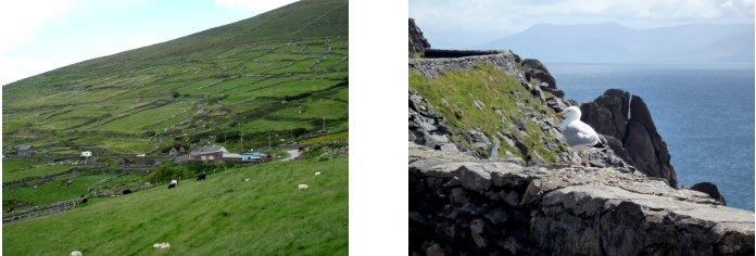 アイルランド編(42):ディングル半島(08.8)_c0051620_7444642.jpg