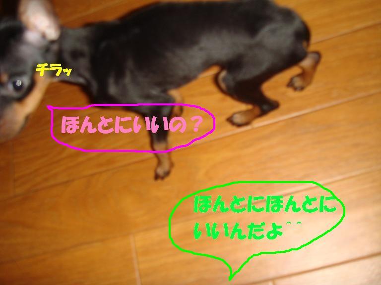 b0175432_1542578.jpg