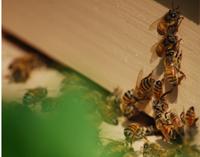 蜜蜂の家 2_c0085543_2202870.jpg