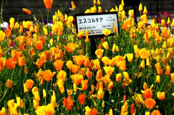 和歌山県植物公園緑花センター _b0093754_001035.jpg