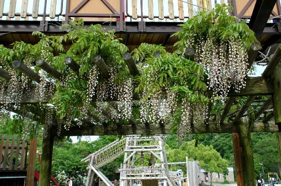 和歌山県植物公園緑花センター _b0093754_074767.jpg