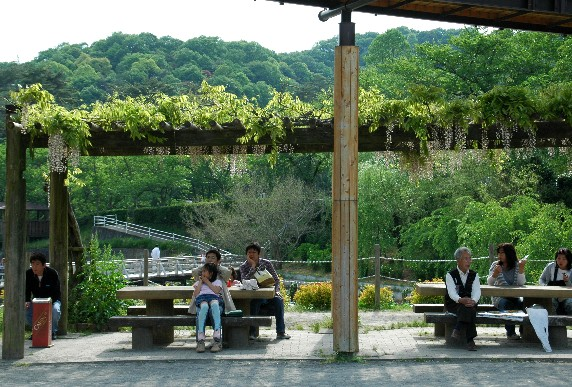 和歌山県植物公園緑花センター _b0093754_082163.jpg