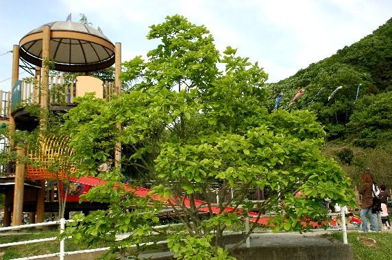 和歌山県植物公園緑花センター _b0093754_085786.jpg