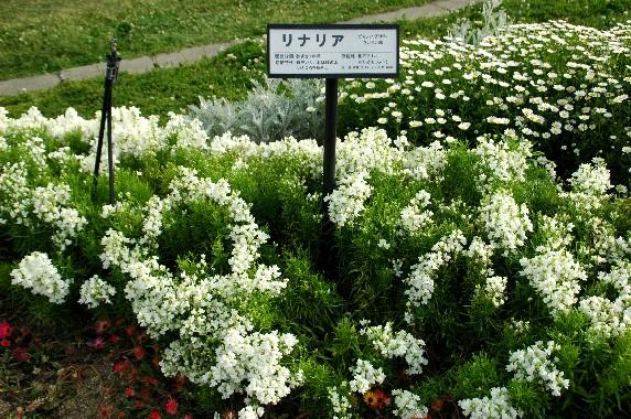 和歌山県植物公園緑花センター _b0093754_23594834.jpg