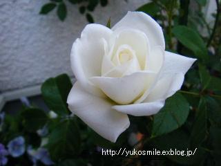 c0178855_1617418.jpg