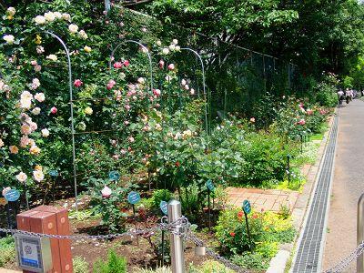 バラの季節のガーデンティパーティ。_a0094959_0561316.jpg
