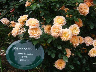 バラの季節のガーデンティパーティ。_a0094959_0572774.jpg