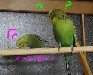 f0196665_2335235.jpg