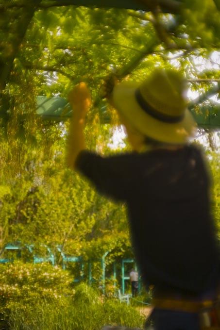 印象派の庭(ガ-デンパ-ク・モネの庭)_c0150383_21592976.jpg