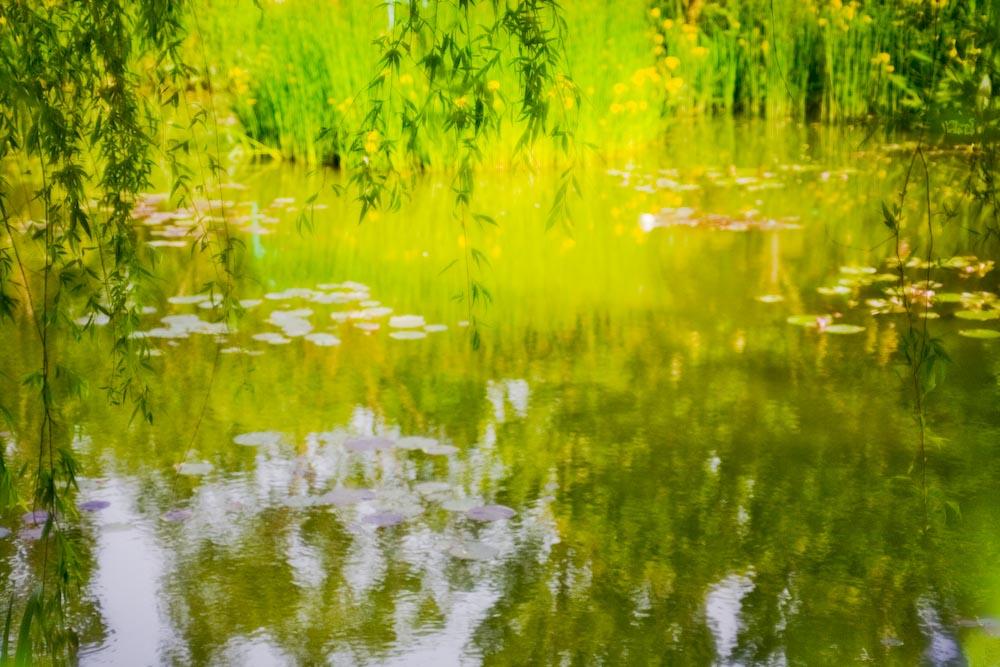 印象派の庭(ガ-デンパ-ク・モネの庭)_c0150383_2205014.jpg
