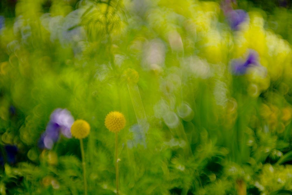 印象派の庭(ガ-デンパ-ク・モネの庭)_c0150383_2213792.jpg