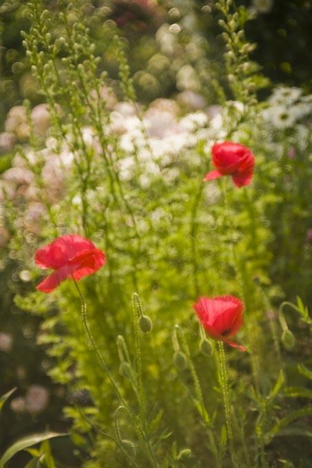印象派の庭(ガ-デンパ-ク・モネの庭)_c0150383_2233452.jpg