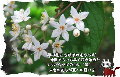 f0137096_22444965.jpg