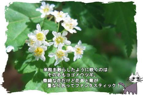 f0137096_22452214.jpg