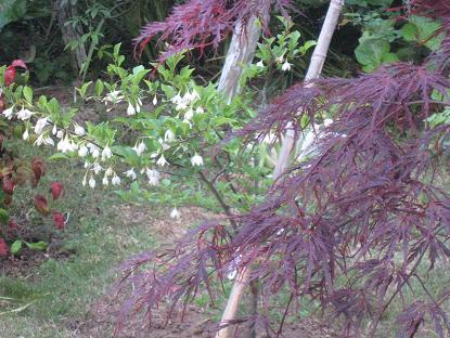 母の日記念樹!_c0119197_837517.jpg