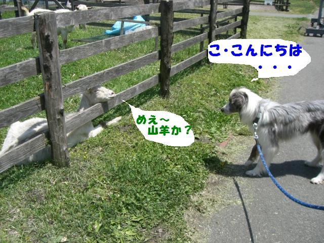 b0137913_0523637.jpg