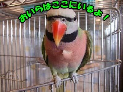 c0133013_1414526.jpg