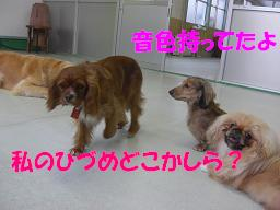 f0170713_1027326.jpg