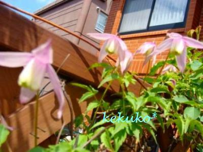 f0170524_15281988.jpg