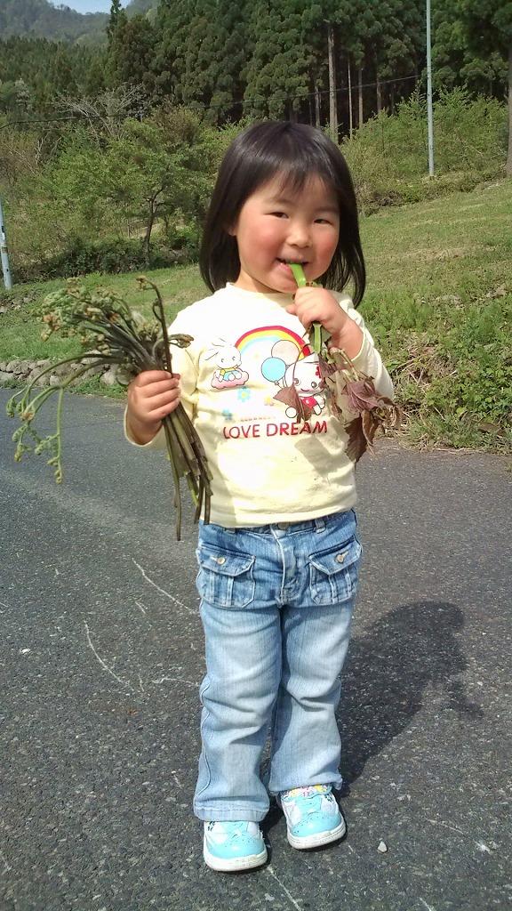 『サンカヨウ』 開花!_f0101226_6521128.jpg