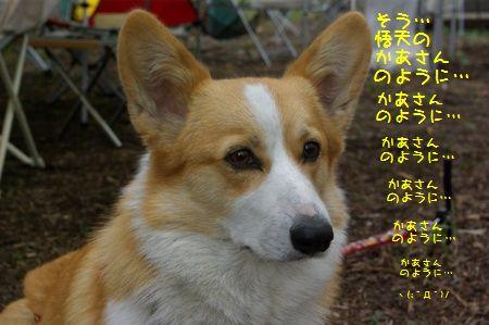 c0116534_0312710.jpg