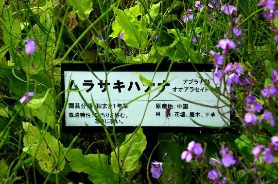 和歌山県植物公園緑花センター _b0093754_002288.jpg
