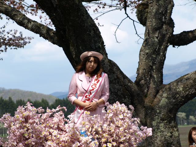 しずない桜まつり_d0153062_9125254.jpg