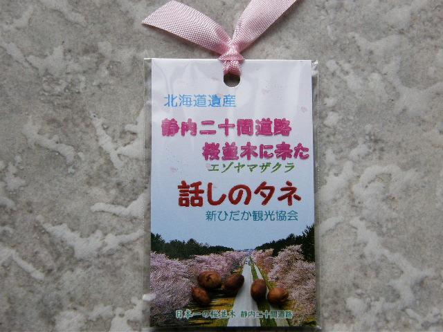 しずない桜まつり_d0153062_9132188.jpg