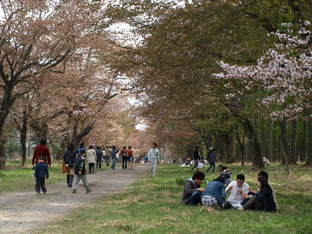 しずない桜まつり_d0153062_9281649.jpg