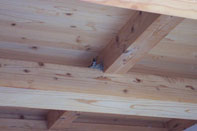 ツバメの巣づくり。_f0000163_132659100.jpg