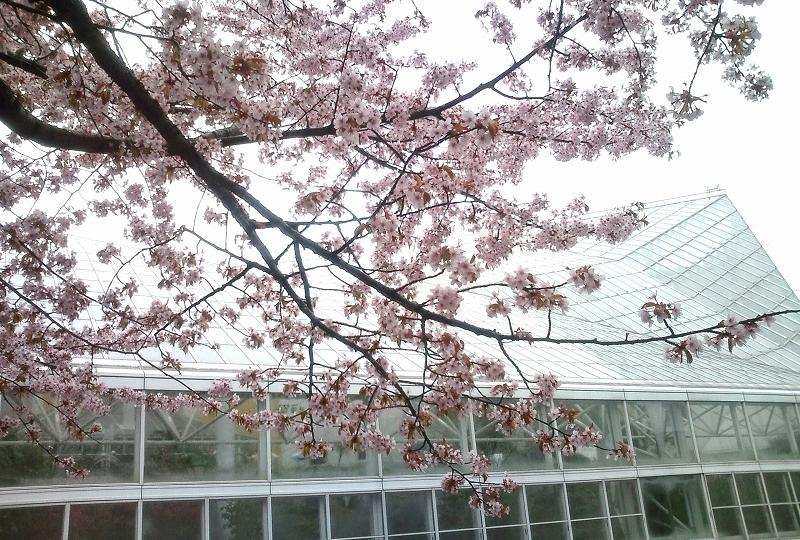 冷たい雨の図書館 <携帯Casio CA001>_d0080785_1554440.jpg