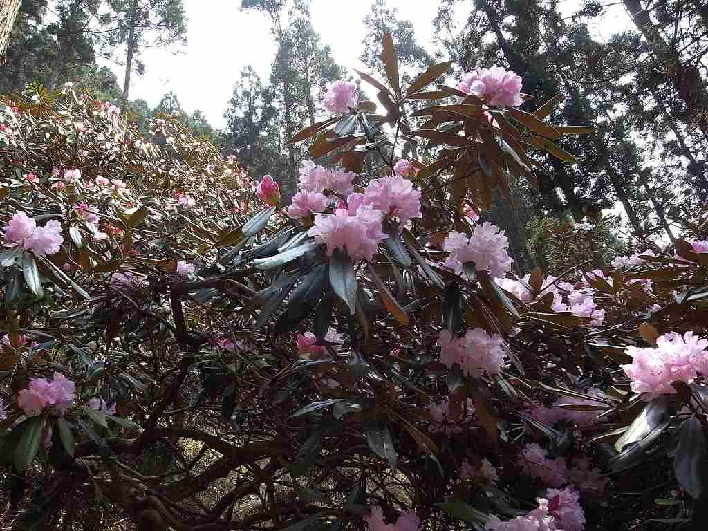 4月19日、福岡県釈迦岳-写真編-_f0138096_10422474.jpg