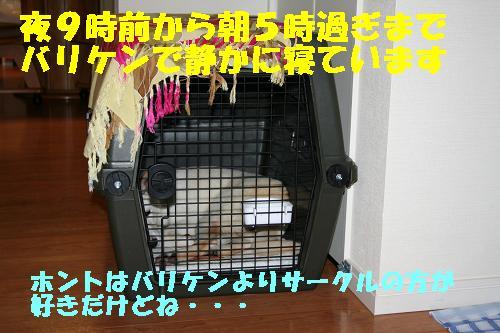 f0121712_14432657.jpg