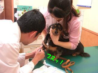 初めての病院!_c0058727_1824857.jpg