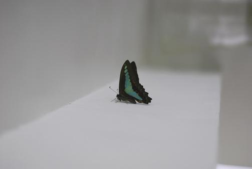ブルーの蝶々_f0179528_23222243.jpg